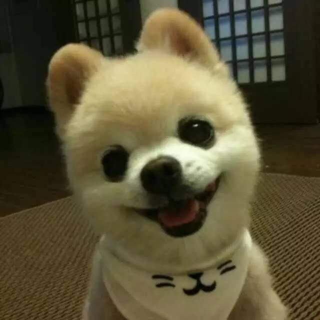 http://www.shangoudaohang.com/shengxian/246909.html