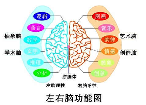 最强大脑右脑开发,快速记忆背后的秘密