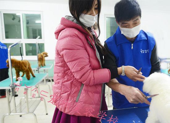 北京宠物美容师工资多少