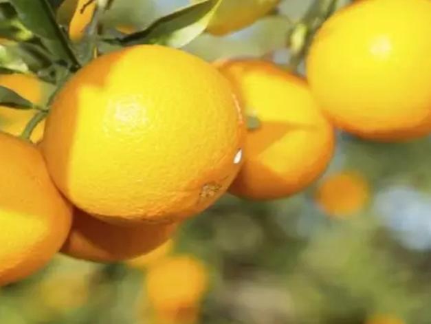 """澳洲橙子都被中国买光啦!澳洲人又要""""断粮""""了…"""