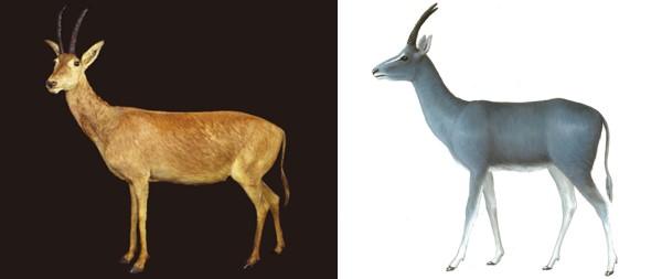 """""""蓝色""""皮毛的哺乳动物真的存在吗?"""