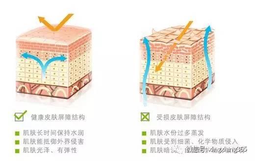 """皮肤屏障是由皮脂膜,角质层胶蛋白,脂质,""""三明治""""结构,砖墙结构等共同"""