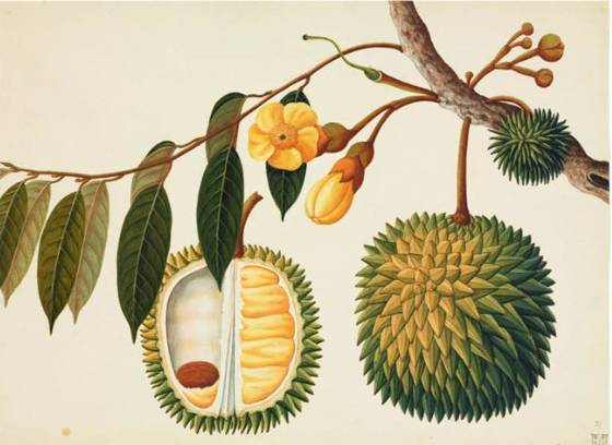 10种绝美的艺术女人植物最喜欢是的情趣什么图片