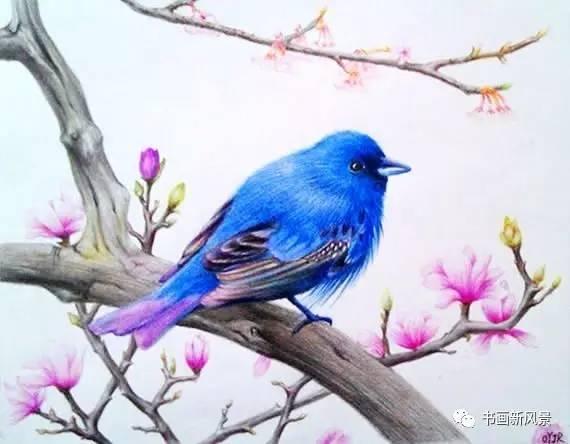 【静赏】彩铅画出来的漂亮小鸟