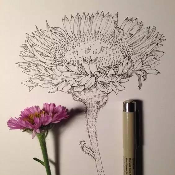 针管笔手绘也很美