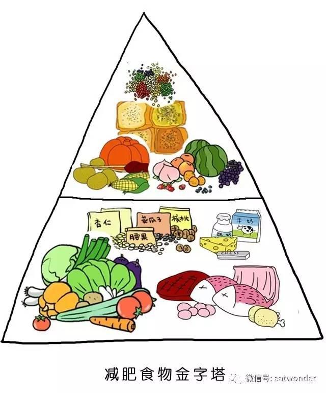 食物在金字塔里的比例