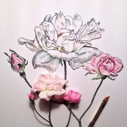 花卉圆珠笔画
