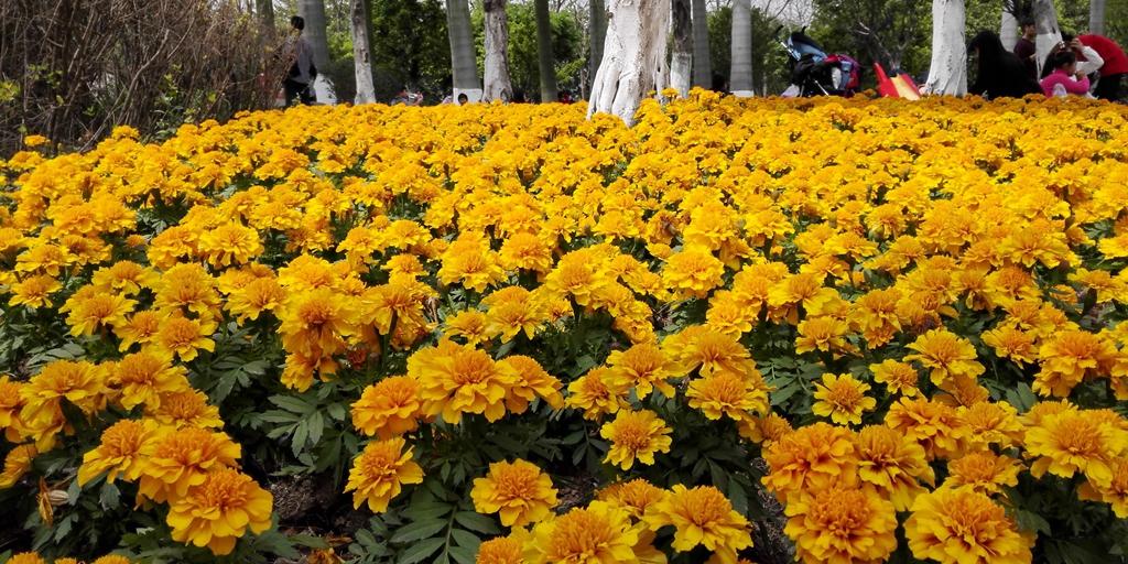 春暖花开黄色论坛_春暖花开,三八节陪她去看\