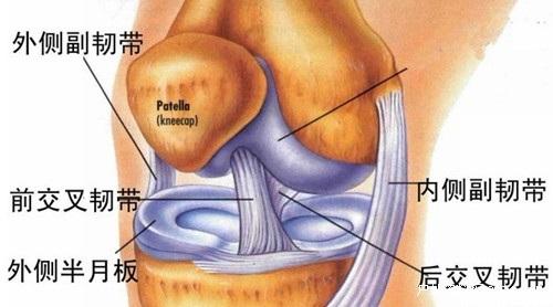 半月板损伤如何锻炼能帮助恢复