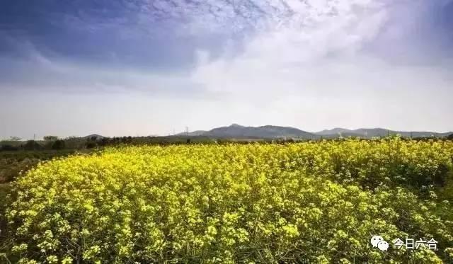 一篇文章带你走近追赶春天的养蜂人(内附六合油菜花