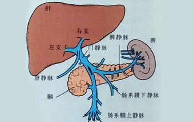 肝脏生理解剖结构_肝硬化的发生原因有哪些?