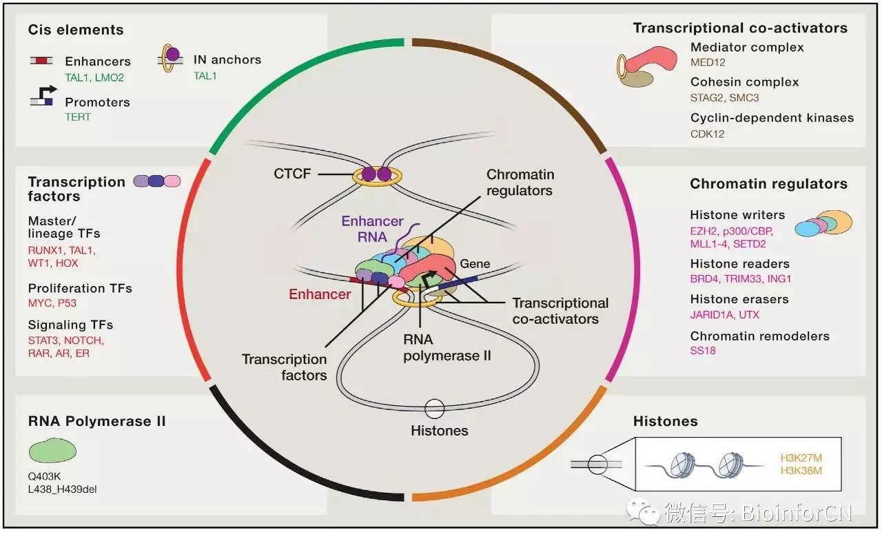 """#表观全局##基因组观#肿瘤的""""转录调控 """"失控成瘾机制(Cell 干货V1.0)中英对译"""