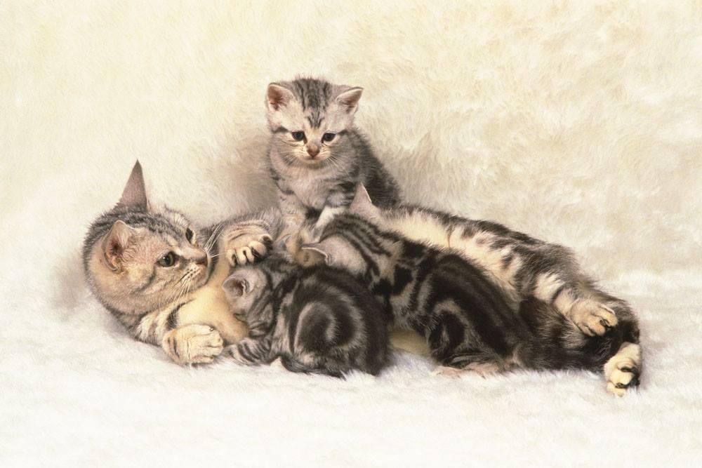 「貓 與 媽媽」的圖片搜尋結果