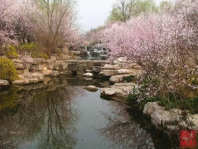 赏花 与其留恋三生三世十里桃花,不如到海淀欣赏一世春花