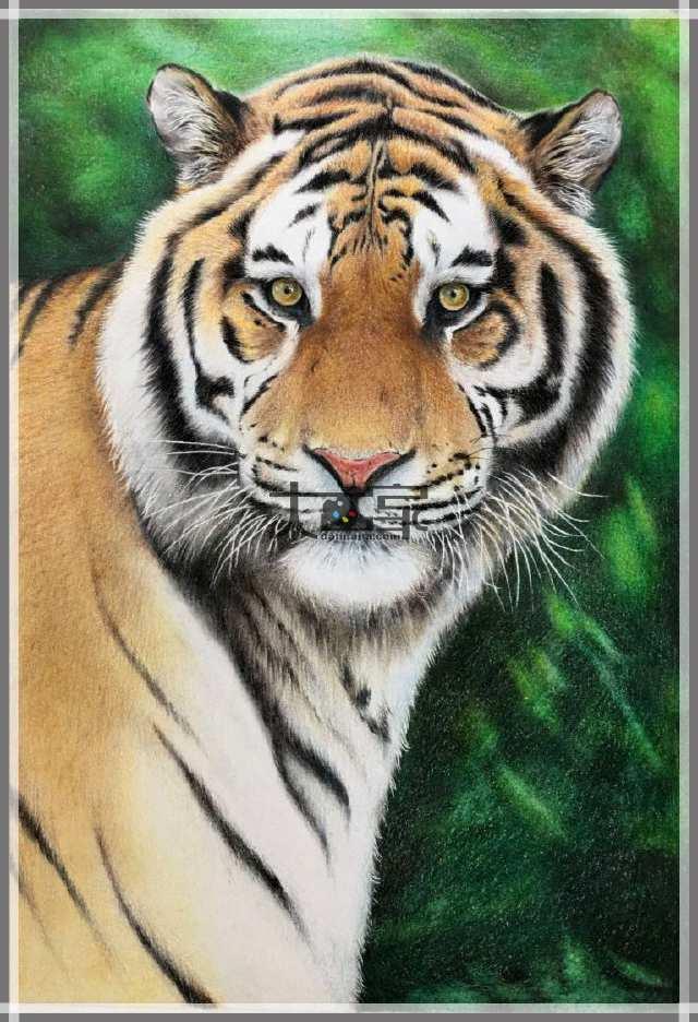 彩铅手绘老虎教程图解