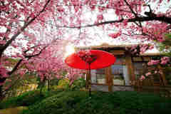 带你看尽成都的十里桃花,就在成都三圣乡
