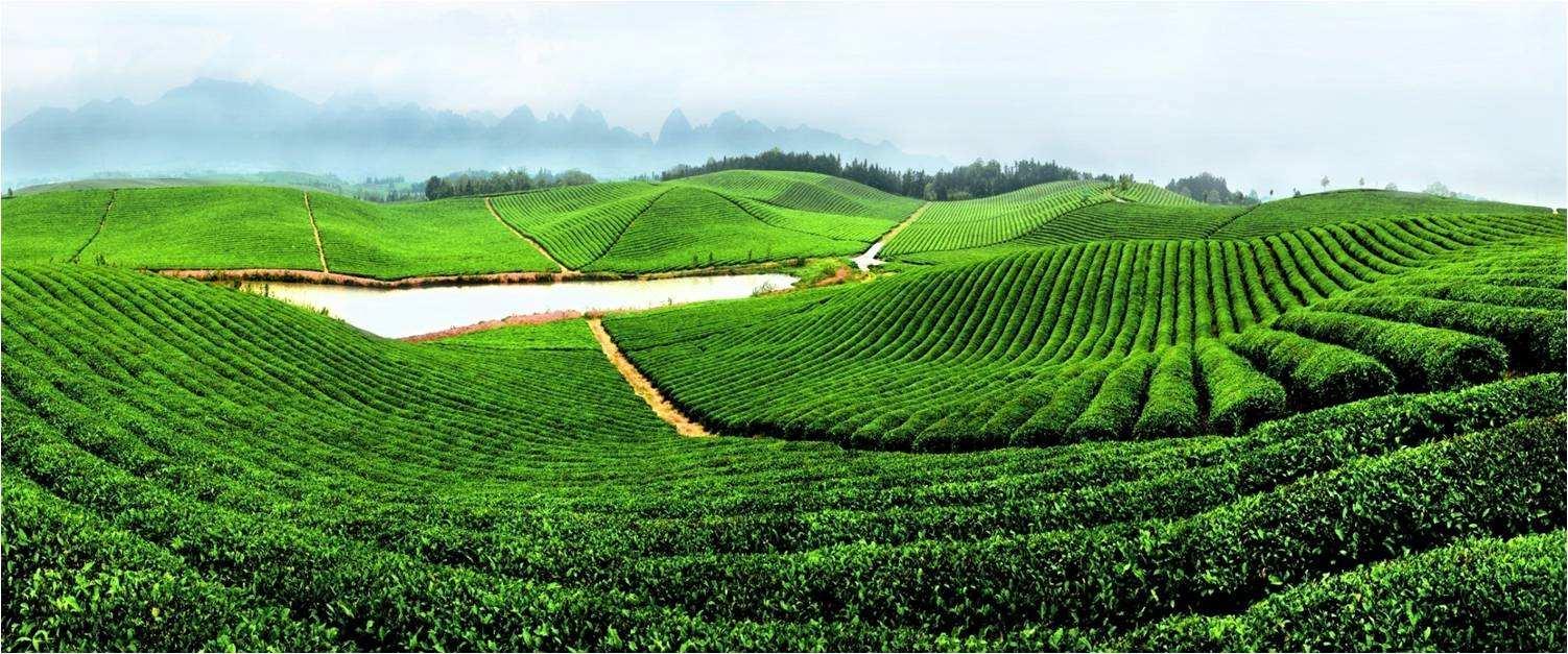 财经 正文  英山县是中国茶叶之乡,隶属于湖北省黄冈市,位于湖北省图片