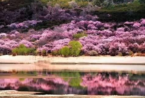 这个春天,择一处美景,陪父母出游吧图片