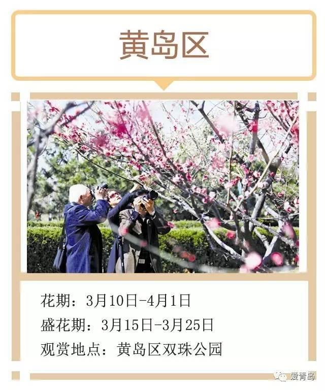 春暖花开,这份青岛赏梅花地图请收好!