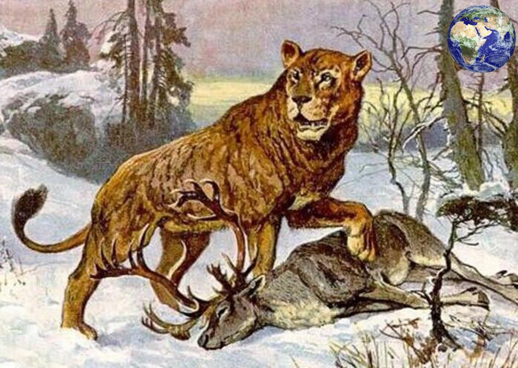 洞狮vs残暴狮-古时期中国也有狮子,跟剑齿虎争霸比东北虎更大