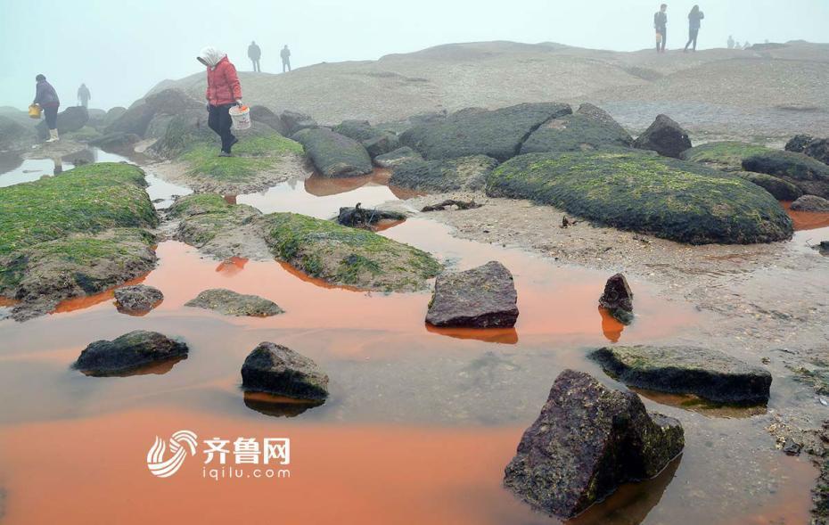 """山东日照现34赤潮34景象 风景区海水被染红图"""""""