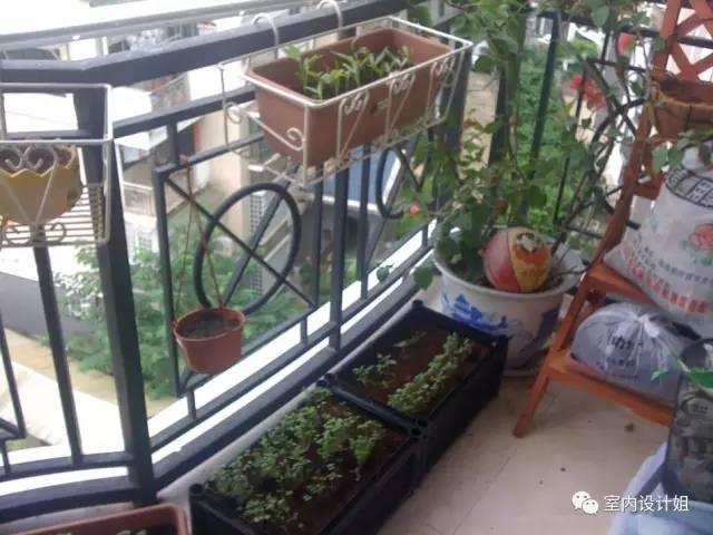阳台种花种草,不如种菜实在