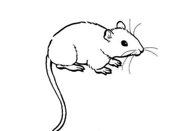 5、农历二月属鼠的女孩:给属鼠女孩起名 二月初三生