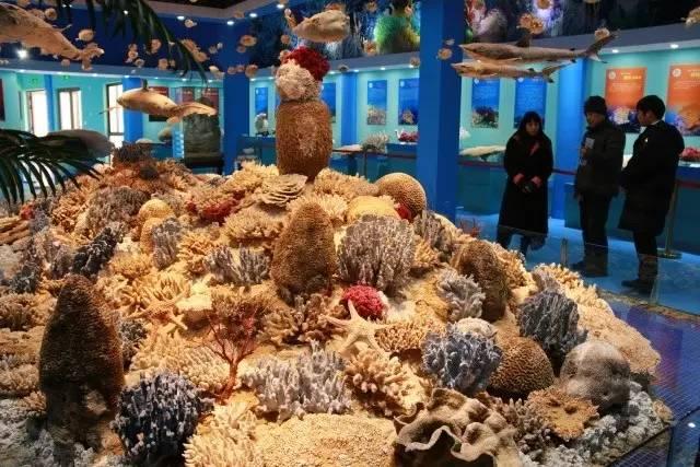 【崇明景点】长兴岛郊野公园珊瑚馆参观记