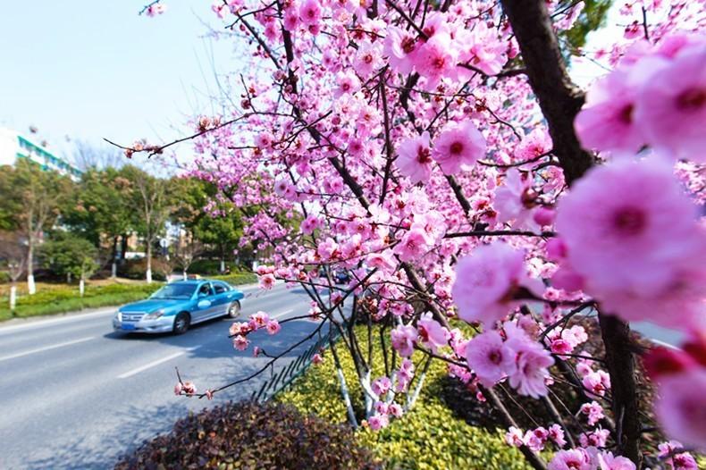 权威 城北望宸阁预计6月投用 又一条 国家级森林步道 4月底亮相 接下来杭州还有17个好消息