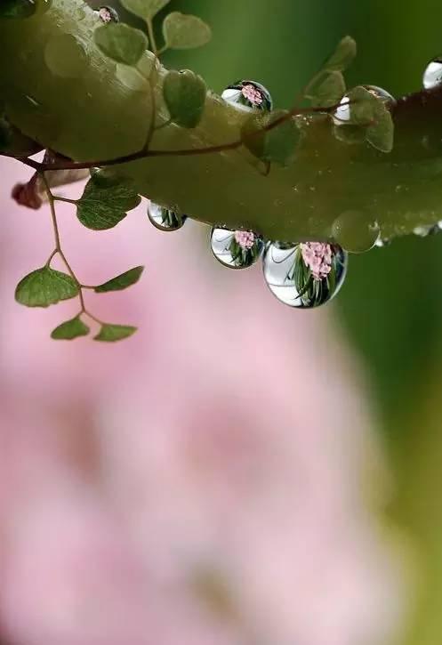 水滴里的世界,实在太美了 - 冰融 - 冰融的博客