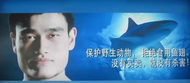 """香港怎么了?天台为何成了鲨鱼的""""集中营""""?! - 梅思特 - 你拥有很多,而我,只有你。。。"""