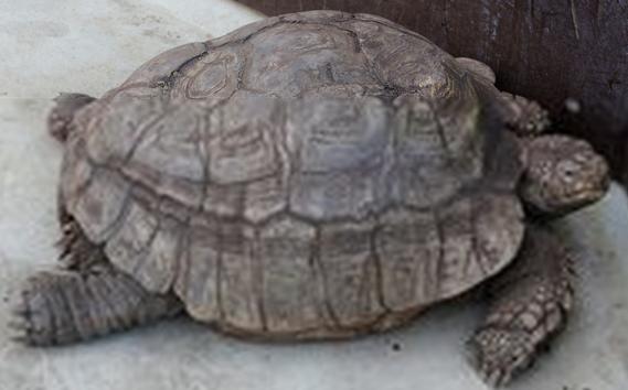 乌龟冬眠怎么养 喜欢的必须看看 也是生命分配