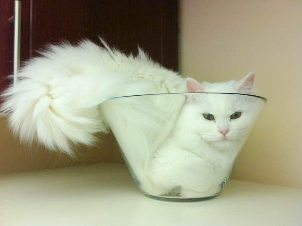 13个证明猫是液体的理由