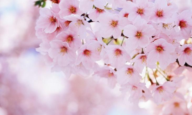 三月桃花岂止十里?河北赏桃花地图