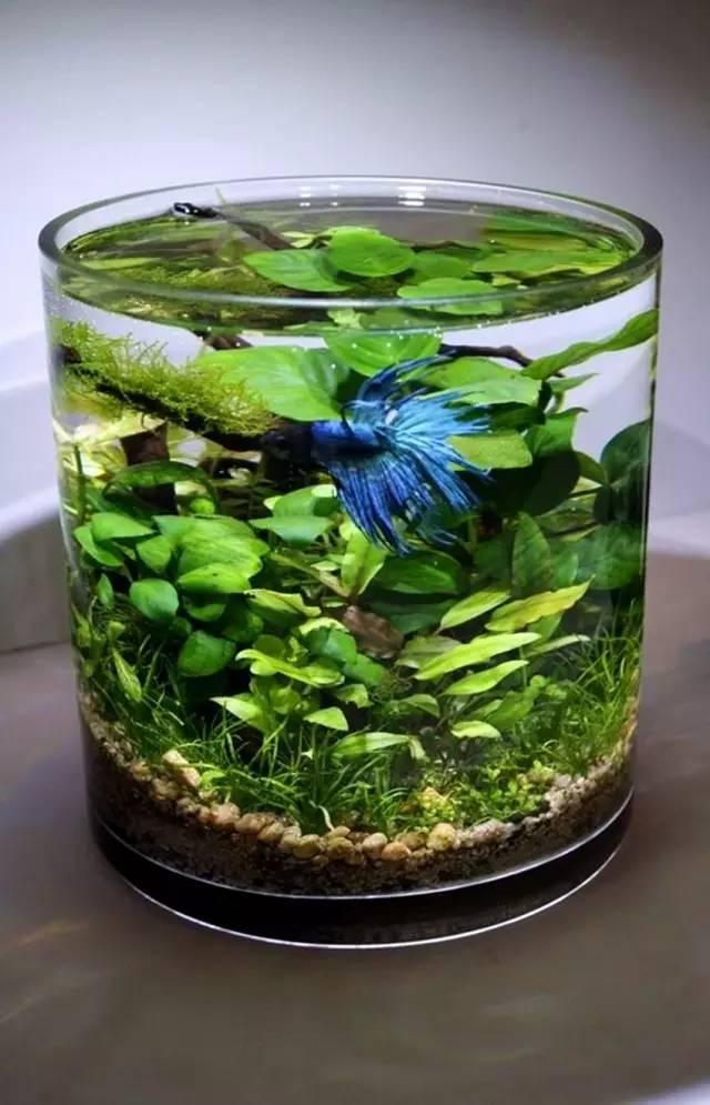 这几种植物根本不用养,往土里扔一片叶子,立刻长出一个花园!图片