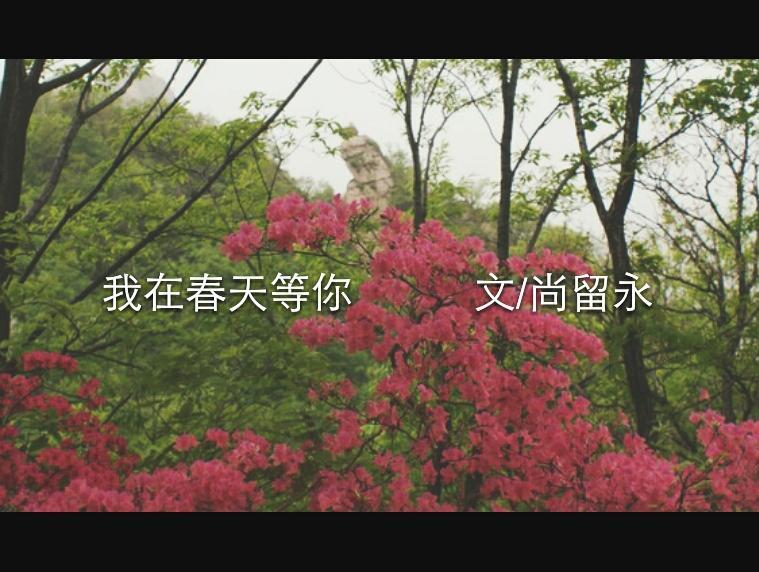 """我在春天等你            文尚留永"""""""