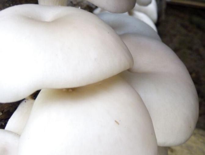 """长在山里最鲜的不是笋,而是第一时间采摘的菇"""""""