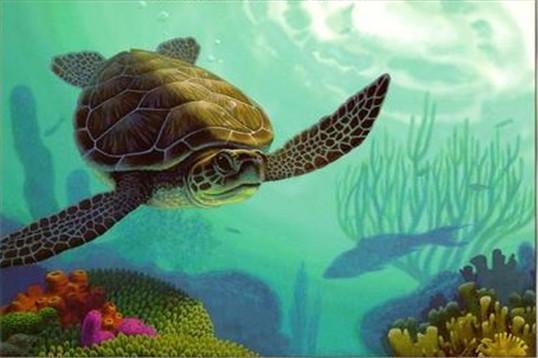 做梦梦见放生乌龟