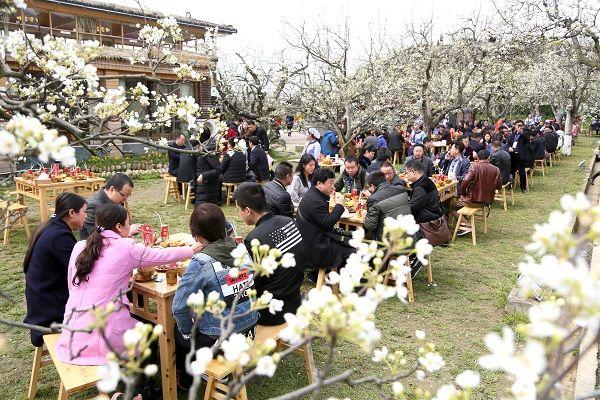 赏梨花 品美食 八方游客 醉 在梨乡苍溪