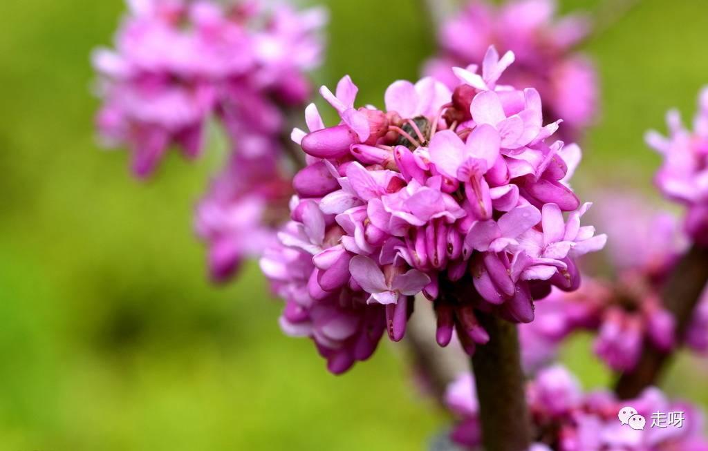 看园林景观,听花语故事,3月到武汉园博园,可赏matlab绘制bode判断怎么图稳定性图片