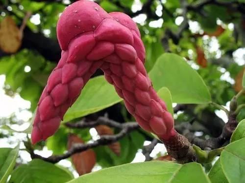 最全春花观赏指南!你可知道你看到的是什么花? - xplhzwy - 走过四季--百花百草百药