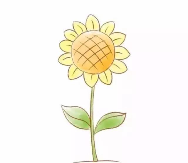 儿童简笔画 六种常见花的画法,教孩子掌握起来