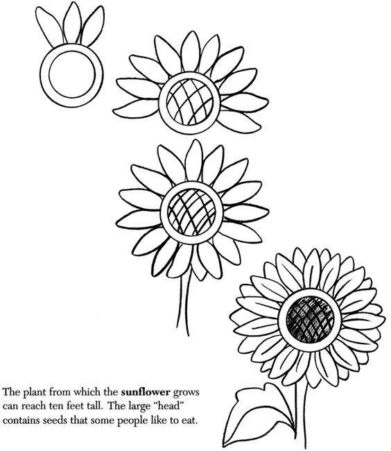 儿童简笔画 春分时节画花园,花卉昆虫的趣味绘画