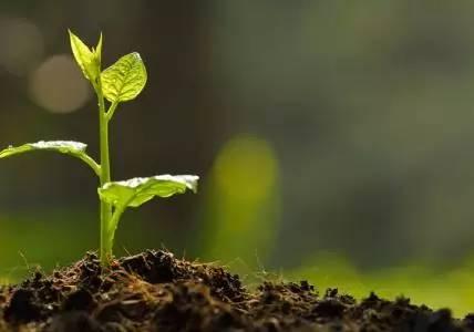 我为春天添绿色,广电报亲子植树活动等你来报名!