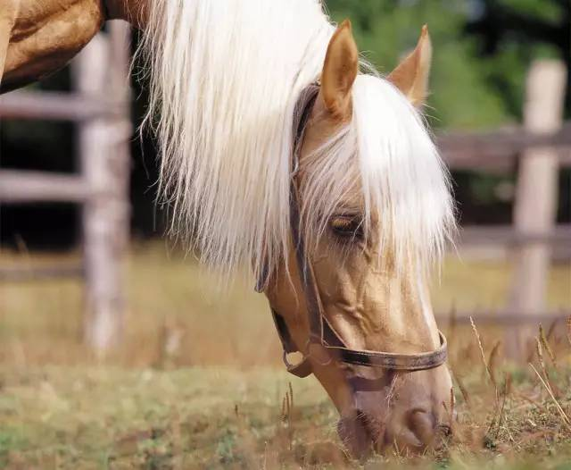 三条黄金喂养规则,让马匹真正吃嘛嘛香