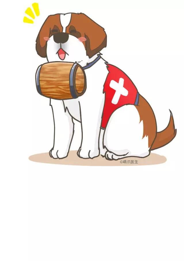 雪山英雄圣伯纳,瑞士人的国宝级狗狗图片