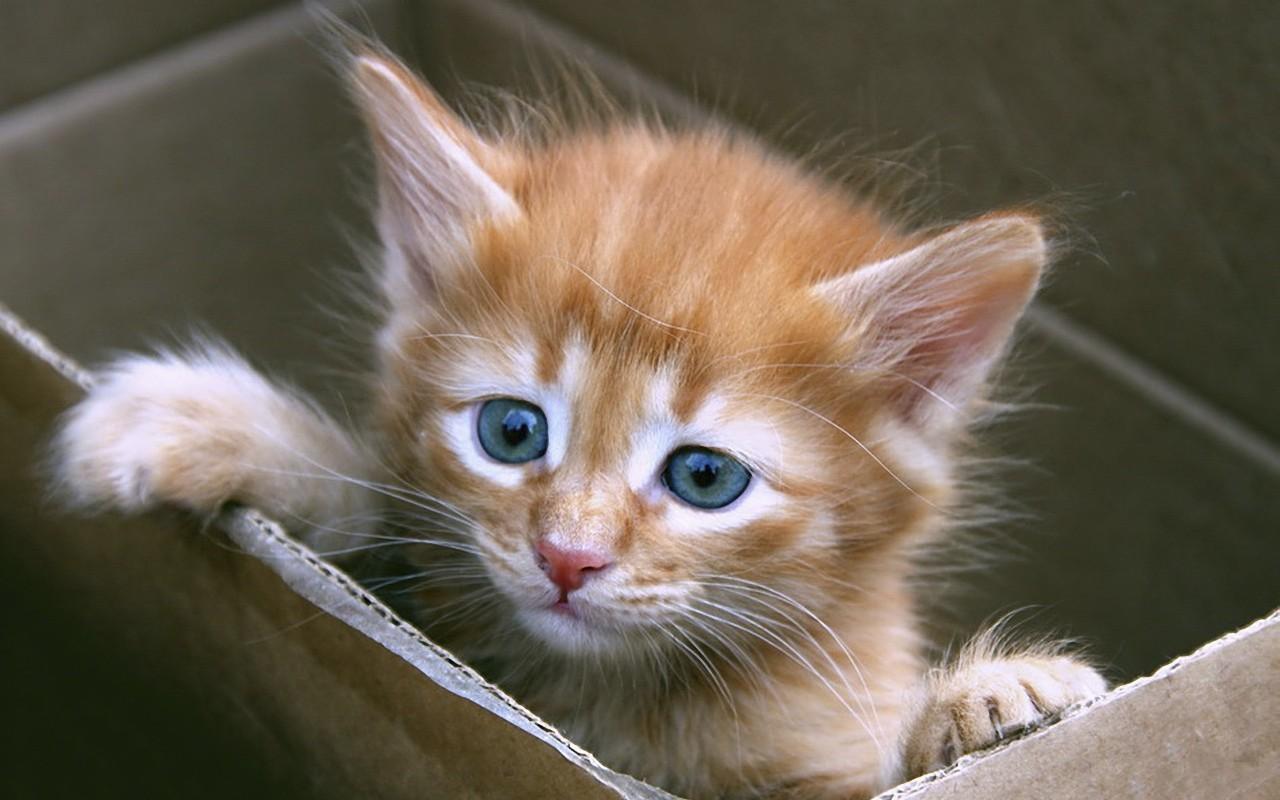 """云养猫新福音!有人捣鼓出了""""小奶猫味儿""""的香水~"""