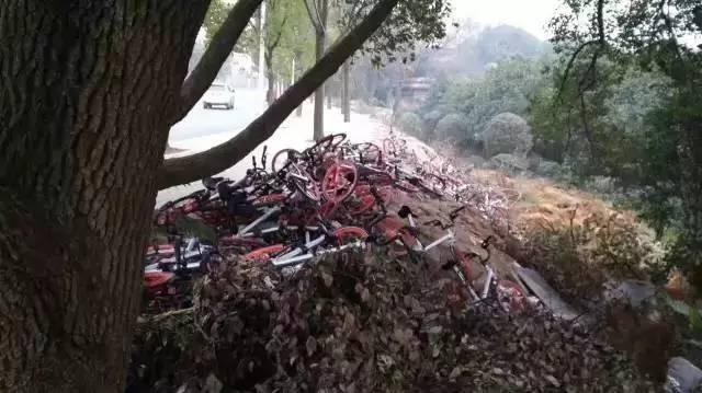 关于共享单车:哪种最好骑?哪种最便宜?你想