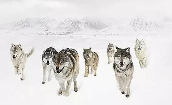 (3)狼性文化强调结果导向,协同能力,但很多项目做狼性文化理解不透彻