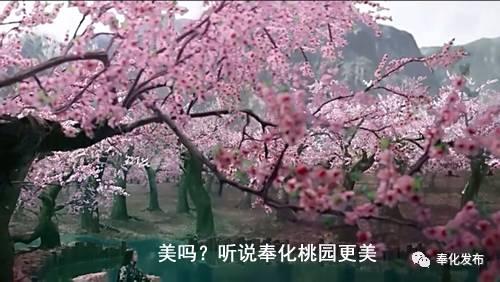 三生三世十里桃花+美食